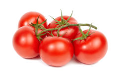 Vine ripe tomatoes. Stock Photo