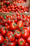Vine Ripe Tomatoes Royalty Free Stock Photo