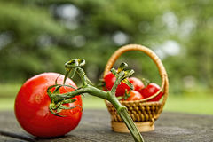 Vine Ripe Tomatos Royalty Free Stock Image