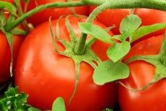 Vine Ripen Tomatoes Royalty Free Stock Photo