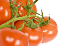 Vine Ripen Tomatoes Royalty Free Stock Images