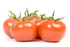 Vine Ripen Tomatoes Stock Photography