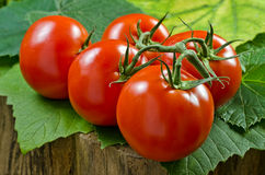 Vine Ripened Tomatoes. On a green leafy background stock photos