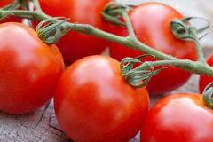 Vine ripened tomatoes. Cherry tomatoes ripened naturally on the vine Stock Image