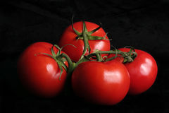 Vine ripened tomatoes. On black background Royalty Free Stock Image