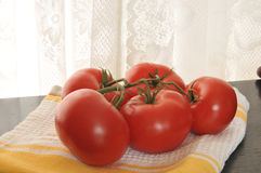 Vine ripened tomatoes Stock Images