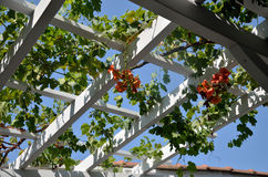 Vine on Roof Structure stock photo
