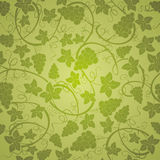 Vine seamless background Stock Images