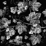 Vine seamless background Stock Photography