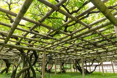 Vine shed in the garden Stock Photography
