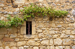 Vine on side of old wall Royalty Free Stock Photos