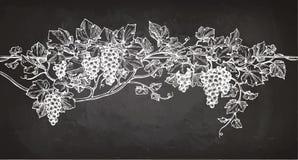 Vine sketch on chalkboard Stock Photography