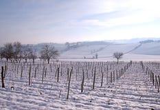 Vine with snow Royalty Free Stock Photo