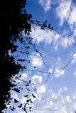 Vine-tangle. Be Entangled By A Visually Entwining Vine Silhouette Stock Photo