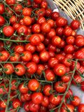 Vine Tomato Royalty Free Stock Photo