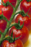 Plump Red Vine Tomatoes Royalty Free Stock Photos