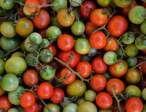 Vine tomato. Many Vine tomato green and red for cooking stock photo