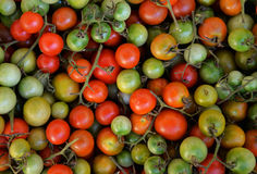 Vine tomato Royalty Free Stock Photography