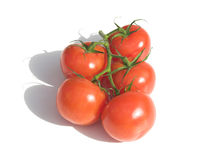 Vine tomatoes. Vine ripened tomatoes - pure white background Royalty Free Stock Image