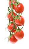 Vine tomatoes Royalty Free Stock Photo