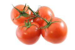 Vine Tomatoes. Four vine tomatoes isolated on white Stock Photography