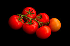 Vine tomatoes on black Stock Photos
