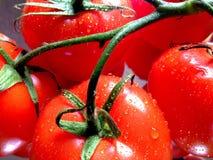 Vine tomatoes. Close view of vine tomatoes Stock Photo