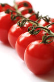 Vine Tomatoes Closeup. Cherry tomatoes on the vine in close up Royalty Free Stock Image