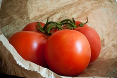 Vine Tomatoes Royalty Free Stock Image