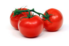 Vine Tomatoes Isolated on White Royalty Free Stock Photography