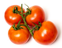 On the vine tomatoes Royalty Free Stock Photos