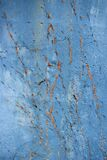 vine tracks on blue concrete wall Royalty Free Stock Photography