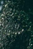 Vine on the tree tropical green leaf. Vine on the tree tropical green leaf, Dark tone stock photography