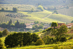 Vine in Tuscany Royalty Free Stock Photo