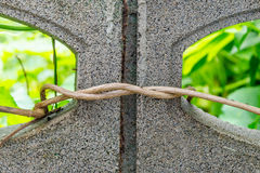 Vine twisted around the brick Stock Image