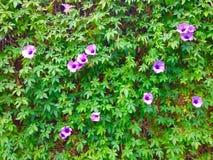 Vine vertical garden background texture Royalty Free Stock Photos
