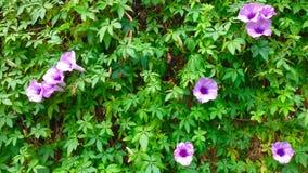 Vine vertical garden background texture Stock Images