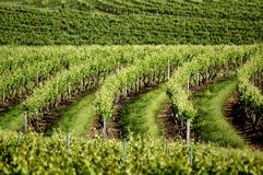 Vine Views. From the Barossa Valley Royalty Free Stock Images