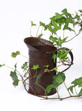 Vine and vintage water container Royalty Free Stock Photography