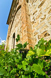 Vine and wall of Rača monastery established in 13. century Stock Photos