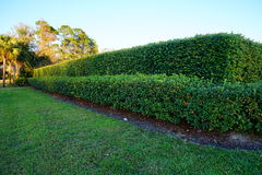 Vine wall Royalty Free Stock Photography