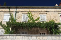 Vine on the wall under the windows Stock Photos