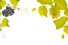 Vine With Grepes Half Frame Royalty Free Stock Images