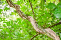 The vine is wrapped around the tree. stock photo