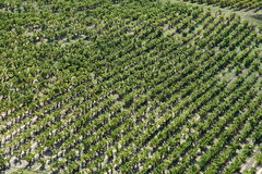 Vine yard seen from the height Royalty Free Stock Photo