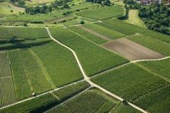 Vine Yards Royalty Free Stock Photo