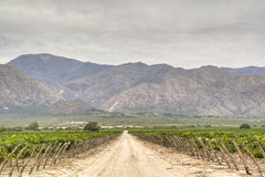Vine yards in Cafayate. Argentina Stock Images