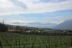 Vine yards of Switzerland. Farm land in the Swiss mountains, with the snow capped Swiss Alps behind Stock Images