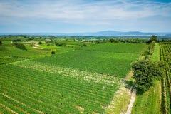 vineculture на Фрайбурге Германии Стоковые Изображения