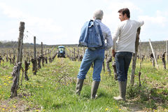 Vinegrowers a vineyard Stock Image